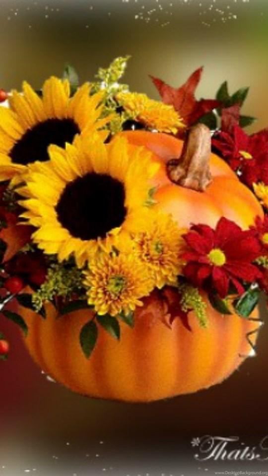Fall Color Wallpaper Widescreen Fall Flowers Wallpapers Celebrate Autumn Fall Pumpkin