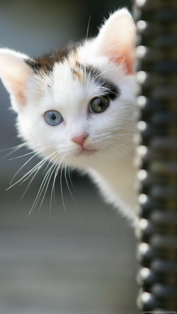 Kitty Wallpaper Iphone Sweet Cat Kitty Animals Cats Kitten Cute Cats Wallpapers