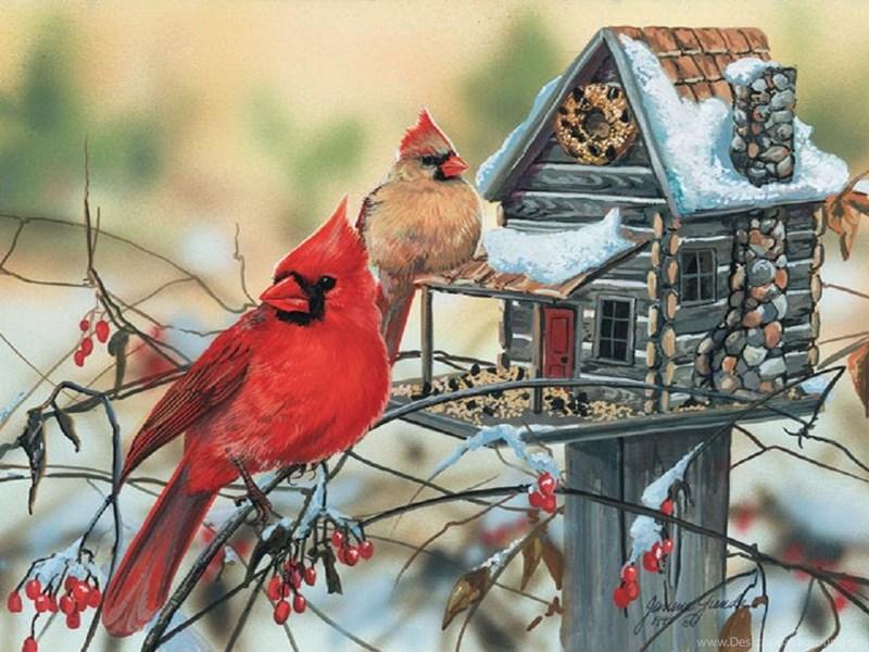 Orchid Iphone Wallpaper Birds Cardinal Rustic Retreat Snow Birdhouse Winter Bird