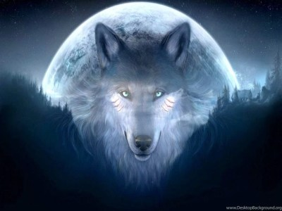 Cool Wolf Backgrounds 11071 Hd Wallpapers In Animals Imagesci Com ... Desktop Background