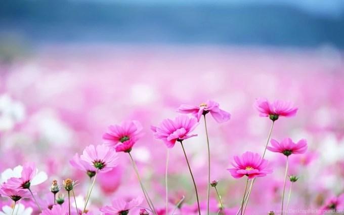Pretty flower desktop backgrounds yokwallpapers pretty flower backgrounds hd wallpapers desktop mightylinksfo