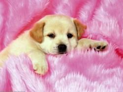 Small Of Cute Puppies Sleeping