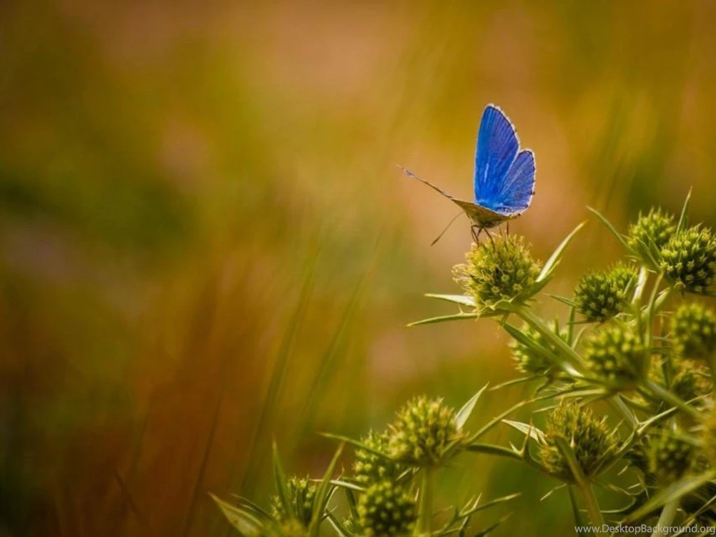 Iphone 5s Animated Wallpaper Beautiful Butterfly Wallpapers Free Download Beautiful