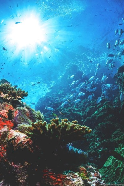 Iphone Wallpapers Under The Sea Desktop Background