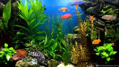 Aquarium Hd Wallpapers High Resolution Ndemok.com Desktop Background