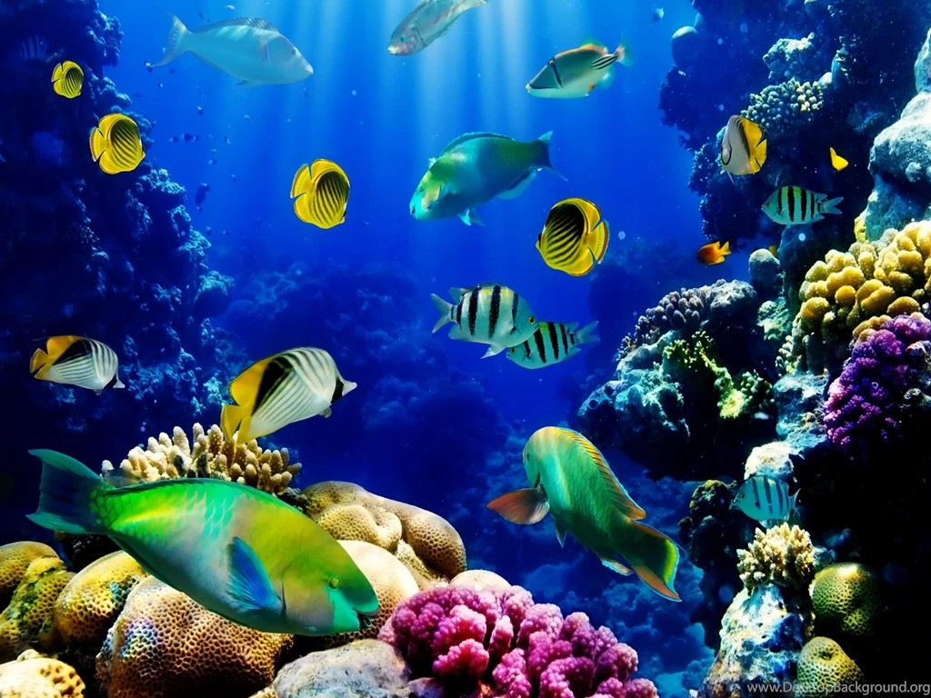Live Wallpaper For Iphone 3gs 3d Live Fish Wallpapers Fish Tank Live Wallpaper Fish