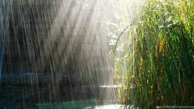 Wallpapers Rainfall Nature After Rain Hd Fullhdwpp Full 1920x1080 ... Desktop Background