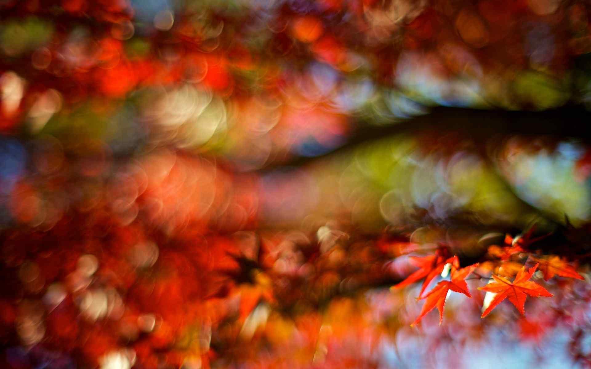 Tree With Leaves Falling Wallpaper 秋天唯美的落叶风景图片高清电脑壁纸 桌面天下(desktx Com)