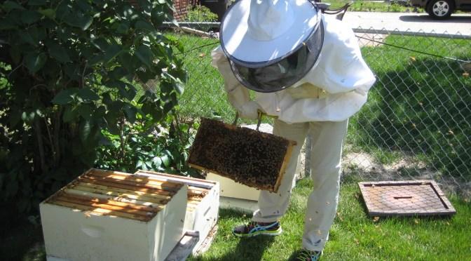 Des Moines backyard beekeepers