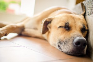 Thinking Of Bringing A Pet Into The Family? Read This First