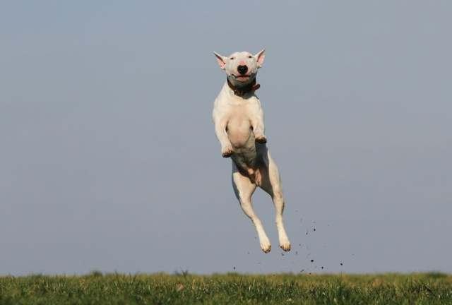 dog-training-joy-fun-159692