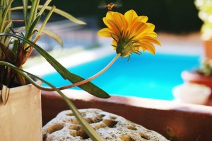 Figuring Out Whether A Pool Is Really The Best Choice For Your Garden