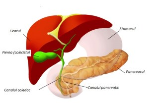 Pancreasul