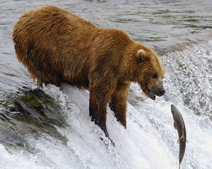 Cute Whale Wallpaper Alaska Bears Kodiak Bear