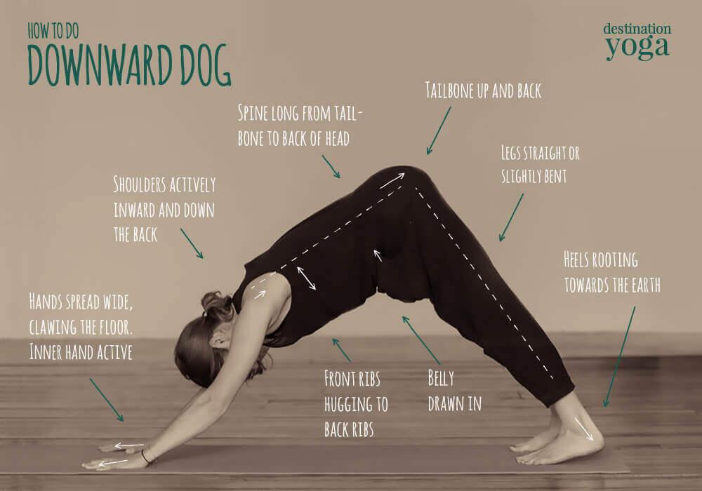 How To Do Downward Dog Destination Yoga