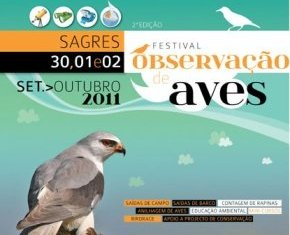 Festival de Observação de Aves no Algarve