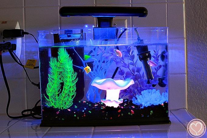 5 Gallon Fish Tank Filter Glofish Restaurering Af Biler