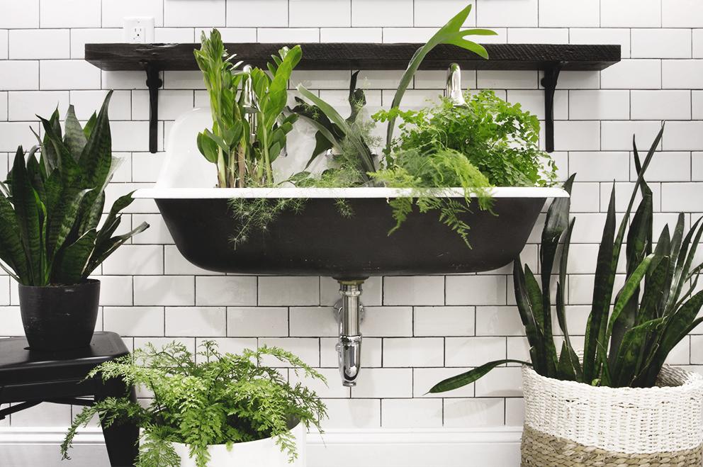 Low Light Bathroom Plants - Democraciaejustica