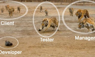 Client Test And Manager Attack Developer Meme