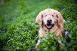 Smiley Dog Without Eyes