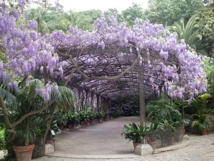 Jard n bot nico la concepci n en m laga deviajeporandalucia for Jardin botanico la concepcion