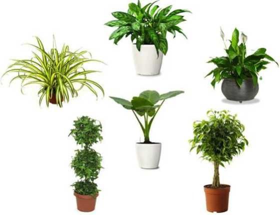 20 Kamerplanten Die De Lucht Zuiveren De Voedzame Keuken