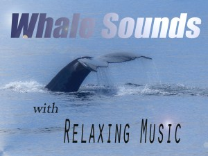 Whale Song - Whale Sounds, Ocean Sounds and Relaxing Music