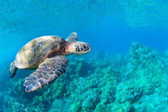 Cute Turtle Wallpaper For Iphone Ocean Sea Turtle Removable Wall Murals Dezign With A Z