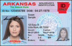 Driver39s License And Identification Card Samples