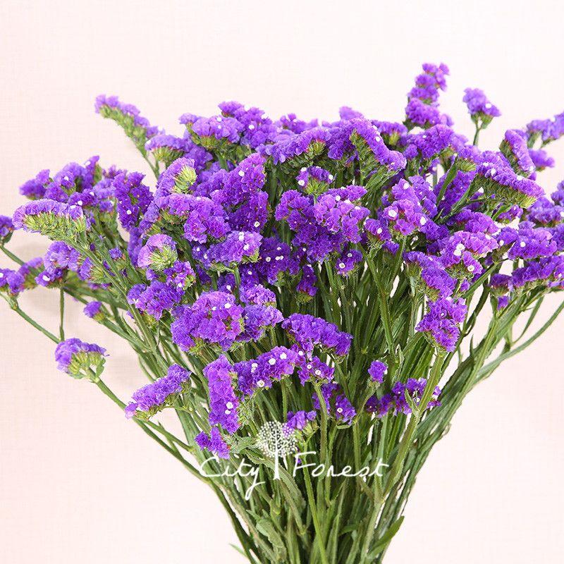 2019 Statice Blue Purple Color Limonium Sinuatum Flower 100 Seeds