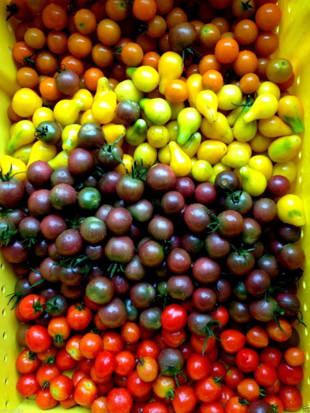 Fullsize Of Black Cherry Tomato