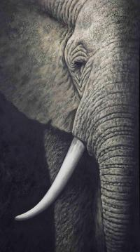 2017 Elephant Oil Painting Grand Elephant Tooth Painting ...