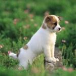 pretty-dogx