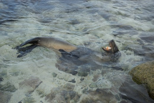 Galapagos Cruise - Mosquera Islet - Sea lions!