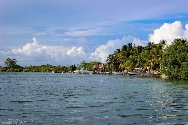 The shoreline of Caye Caulker