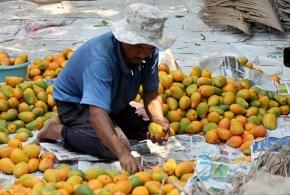 La Fiesta del Mango