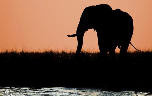 Portada viaje Botswana