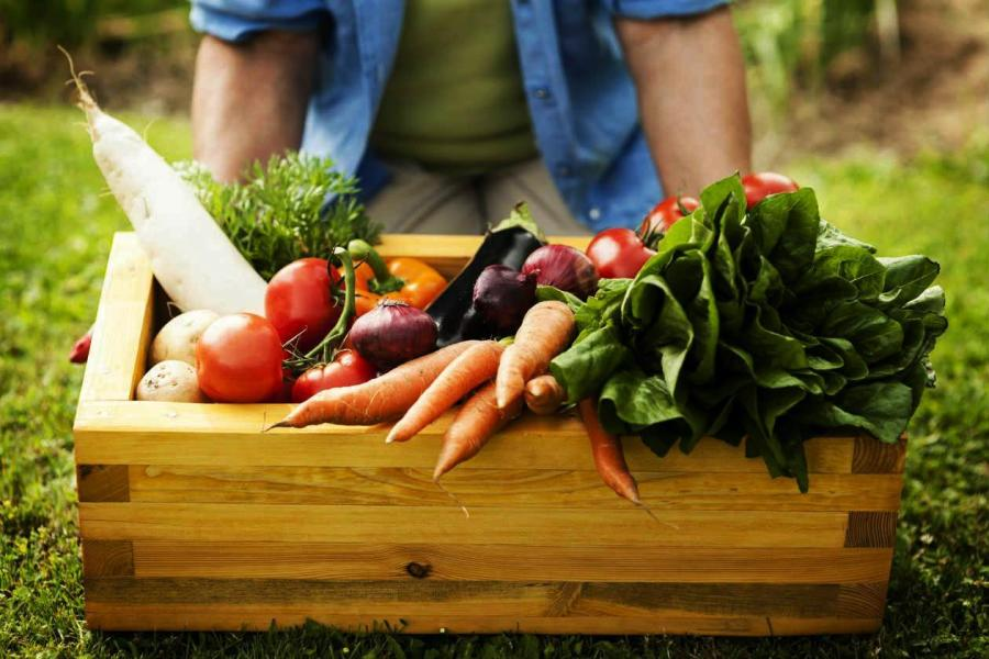 #ValoremosLosAlimentos, basta de desperdiciar comida