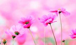 imagenes-flores-250x150