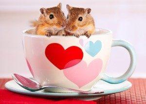 dia-amistad-amor-sapito