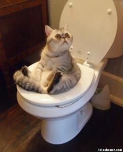 Fotos divertidas de gatos