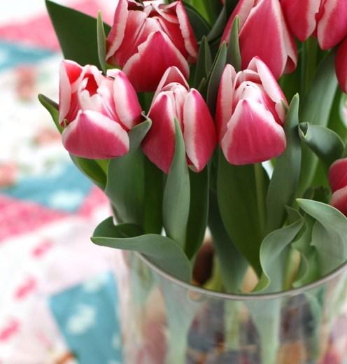 Tulips -001