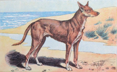 Medium Of Ancient Dog Breeds