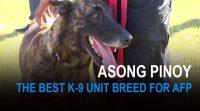 Asong Pinoy  Die beste K-9 Hunderasse fr die ...