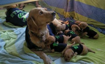 seattle-seahawks-puppies