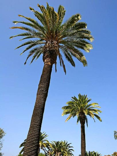 Falling Leaves Wallpaper Live Difference Between Cycads And Palms L Cycads Vs Palms