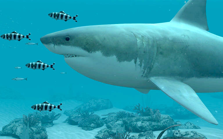 3d Clock Live Wallpaper White Sharks 3d Screensaver Download Animated 3d Screensaver