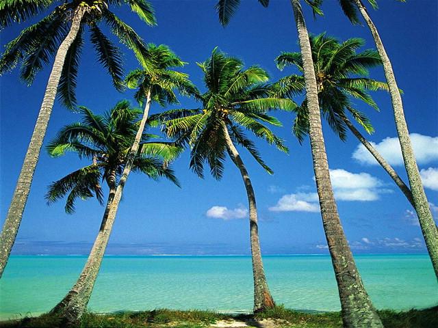 Tropical Ocean 3d Live Wallpaper Dart Tropical Islands Vol 1 Gallery Image 1 Of 3