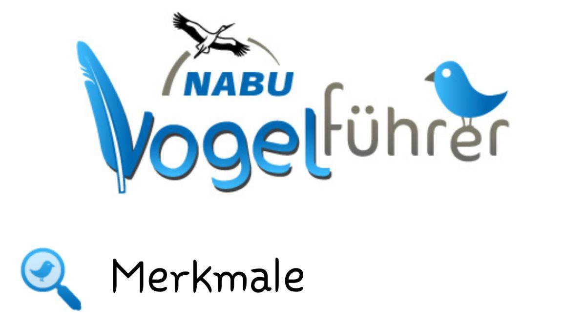 Lieblings-App: Nabu-Vogelführer – Erkenn den Piepmatz!