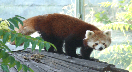 Firefox 15 offline installer